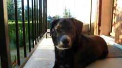 Dargo, chien
