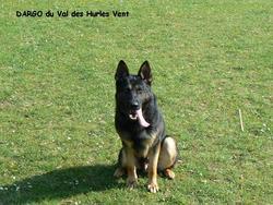 Dargo Du Val Des Hurles Vents, chien Berger allemand