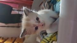 Daryl, chaton