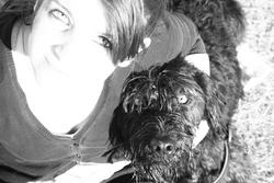 Datscha, chien Schnauzer