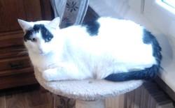 Daya, chat Gouttière