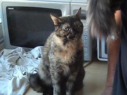 Venus, chat Gouttière