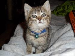 Zanga, chat Gouttière
