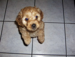 Pepette, chien