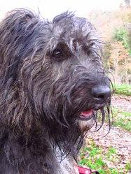 Debbie, chien