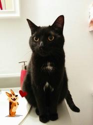 Décibelle, chat Gouttière