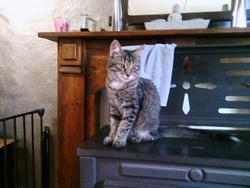 Defqon, chat Gouttière