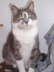 Délia, chat
