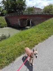 Della, chien