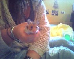 Demeter, rongeur Hamster