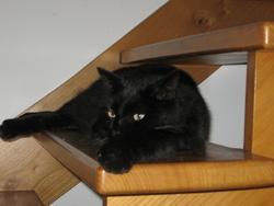 Demon, chat Gouttière