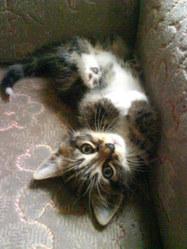 Denzel, chat Gouttière