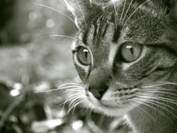 Destinée, chat