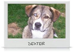 Dexter, chien