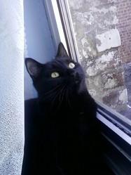 Anubis, chat Gouttière