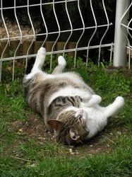 Murphy Mon Pépère, chat