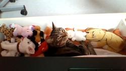 Diabolo, chat Gouttière