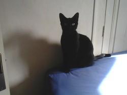 Diagonale, chat Gouttière