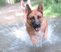 Diam's, chien Berger allemand
