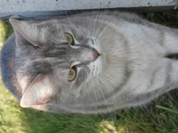 Diamant, chat Gouttière