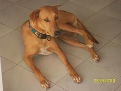 Diana, chien