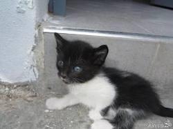 Diana, chat Gouttière