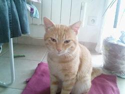 Diddl, chat Gouttière
