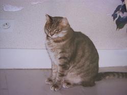 Didi, chat Gouttière