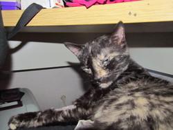 Didou, chat Gouttière