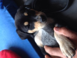 Diego, chien