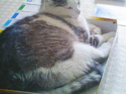 Diego, chat Gouttière