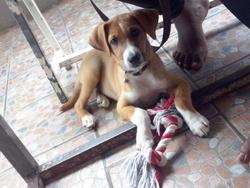 Diego Le Chipeur, chien