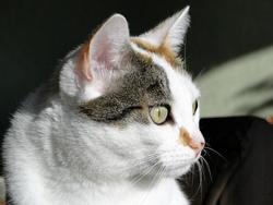 Dilane, chat Gouttière