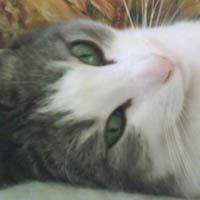 Dina, chat