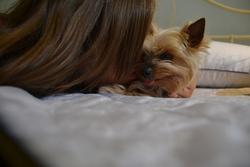 Diorella, chien Yorkshire Terrier