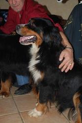 Dixie, chien