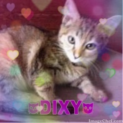 Dixy, chat