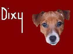 Dixy, chien Jack Russell Terrier