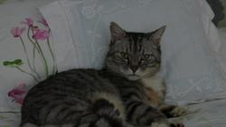 Djack, chat Gouttière