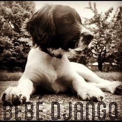 Django, chien