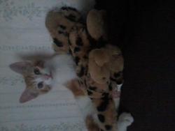 Django, chat Gouttière