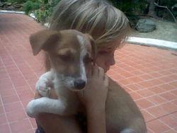Docy, chien Fox-Terrier