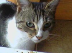 Dodinette, chat Gouttière