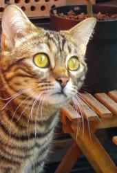 Doudou, chat