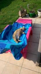 Dola, chat Gouttière