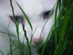 Doliprane, chat Gouttière