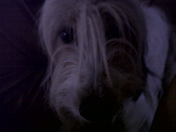 Dolly, chien