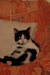 Domino, chat