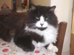 Gibbs, chat Gouttière