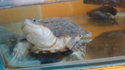 Donatello, autres
